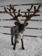 reindeer-1